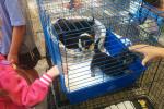 Марафон к Международному дню защиты бездомных животных